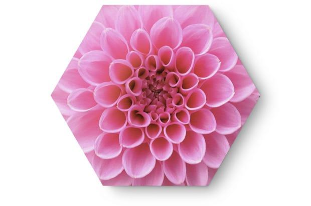 Flowers3